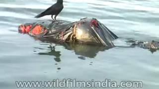 Dead bodies found in river  Ganga - India