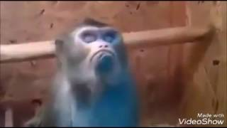 the monkey was disappointed