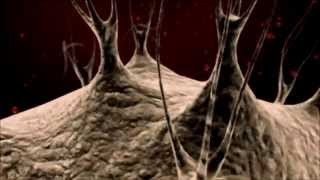 Cell Structure and Function  TEA Biotechnology Podcast 1.2