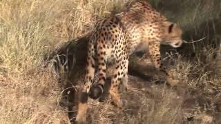 Der Gepard [HD 1280x720 MPEG4 Wide Screen].mp4