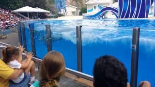 Sea World Orlando Blue Horizons Dolphin show
