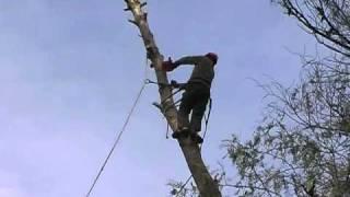 Poda y tala de árboles de altura y de dificil acceso