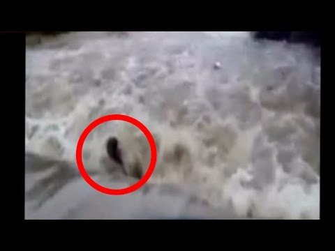 Xxx Mp4 Video Bikers Get Washed Away In Flood In Madhya Pradesh 3gp Sex