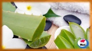 Propiedades curativas de la Sabila o Aloe Vera - Sabila planta medicinal - Aloe Vera beneficios
