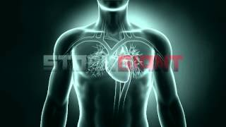 Heart Xray Animation Stock Footage