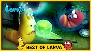 LARVA | BEST OF LARVA | Funny Cartoons for Kids | Cartoons For Children | LARVA 2017 WEEK 18