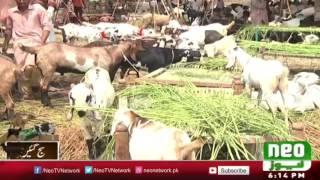 Maweshi Mandi 2016 | Sohrab Goth Mandi 2016 | Neo News