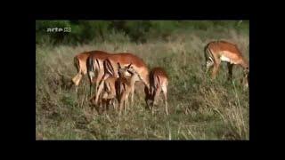 Serengeti - Animaux Sauvages Documentaire Français