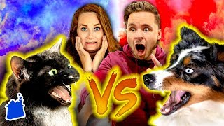 Dogs React to our NEW Cat! 🙀