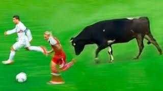 8 حيوانات شاركت في مباريات كرة القدم ! لن تصدق من هو الحيوان الأخير..!!