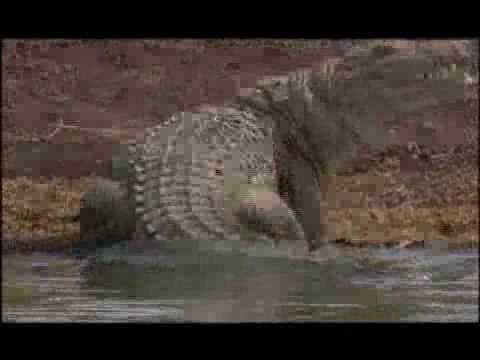 Coccodrilli giganti