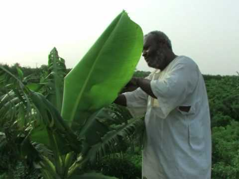 Xxx Mp4 Sudan Struggles To Develop Farming 3gp Sex
