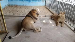 رحله الى حديقة حيوانات في طولكرم مع جمال العمواسي