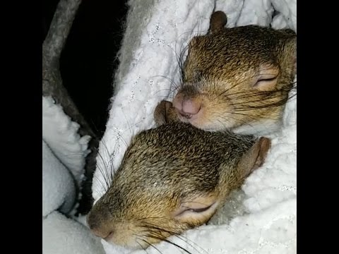 Squirrel Siblings Are The Cutest Little Rebels The Dodo