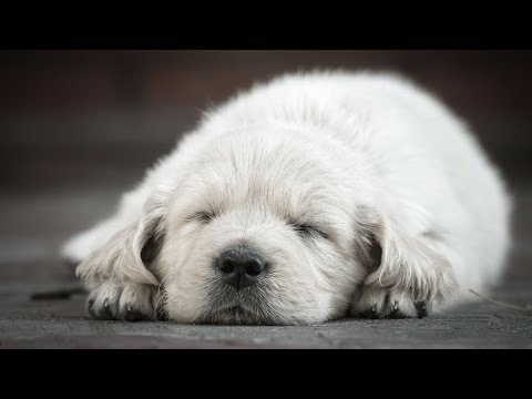 How to Keep Puppy from Crying at Night | Puppy Care