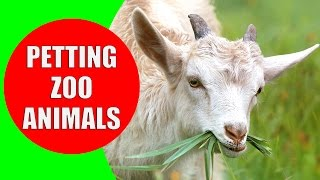 THE PETTING ZOO ANIMALS - Children's Zoo Farm   Animal Sounds for Children to Learn by Kiddopedia