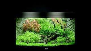Juwel Aquarium Vision 180 Einrichtungsbeispiel / Tutorial