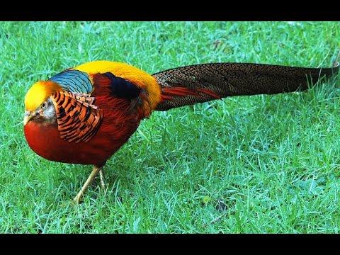 Cute Beautiful Animals & Birds Video Compilation 2014 [HD VIDEO]