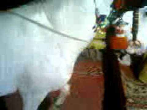 Xxx Mp4 Horse Dance Gujranwala Ch M No0r 3gp 3gp Sex