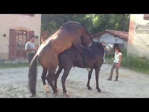 Saillie dans le respect du cheval : Marc Dorcel Production Présente VIVI