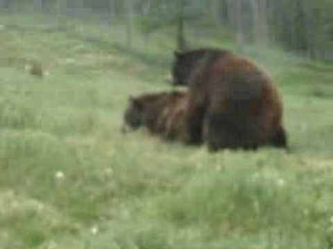 Bear Sex, Part One
