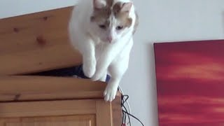 Cute cat makes a big jump - With Slowmotion - Full-HD