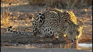 Djuma Game Reserve Waterhole - Live Cam