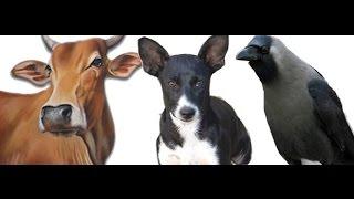 गाय, कुत्ता, कौआ और चींटी को अन्न देने से क्या लाभ है//हिन्दू धर्म में क्यों महत्वपूर्ण हैं।