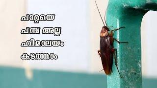 പാറ്റ ശല്യം ഒഴിവാക്കാനുള്ള എളുപ്പ വഴി/Malayalam Health tips