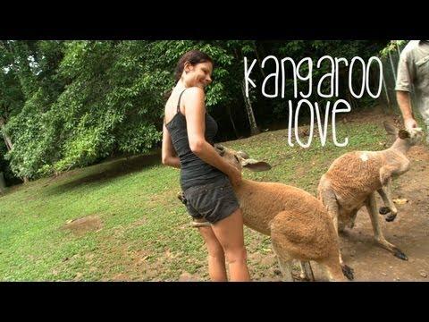 Xxx Mp4 Kangaroo Love Australia 3gp Sex
