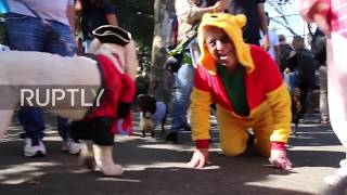 Who let the dogs out? Behold the best-dressed pups at NYC's annual Halloween dog parade