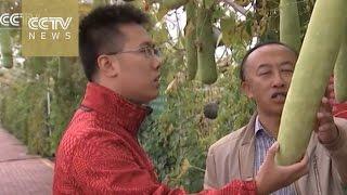 Xinjiang reclaims lands swallowed by Gobi Desert