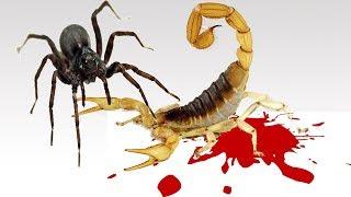 هل تعلم ما الحكمة من خلق الثعابين و الافاعي و العقارب رغم أنها حيوانات سامة ؟