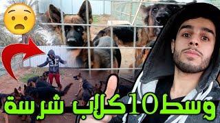 اقوة تحديات اليوتيوب 💪 #محمد حلب البقرة 🐮 | حماس🤣 #عمار ماهر