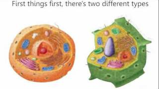 Cells Cells - Parts of the Cell Rap