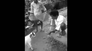 Dont Mess with INDIAN Goats | KO ed By little GOAT | FUNNY VIDEO