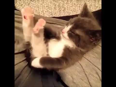 gato peidando