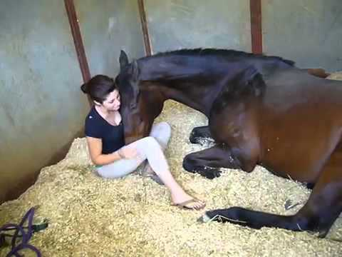 Xxx Mp4 Girl And Horse Great Bond 3gp Sex