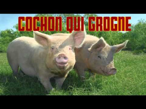 Xxx Mp4 COCHON Qui GROGNE CRI Du COCHON Verso Del Maiale PIG Sound 3gp Sex