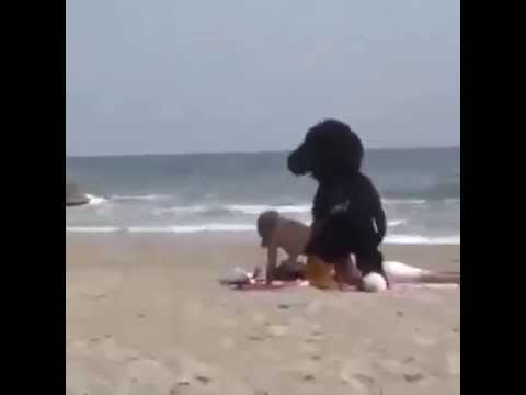 Fuck On The Beach Dog VS Girl Sex PRANK