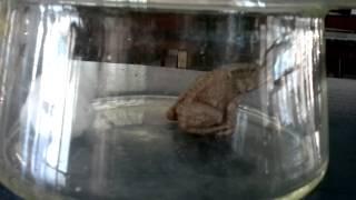 Kreatif's K'Jo Making the Frog to Faint