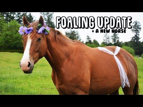 Xxx Mp4 Life Update Foal Watch A NEW HORSE 3gp Sex