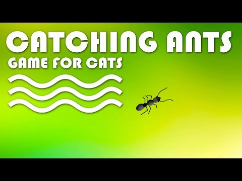 Xxx Mp4 ENTERTAINMENT VIDEO FOR CATS Cat Game On Screen Catching Ants 3gp Sex