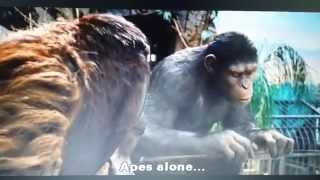 Apes Are Stupid