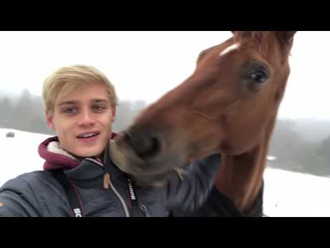 Xxx Mp4 AUSTRALIAN HORSE SEES SNOW FOR THE FIRST TIME 3gp Sex