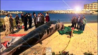 EGYPT || 12-Meter long dead whale washes up on Egypt