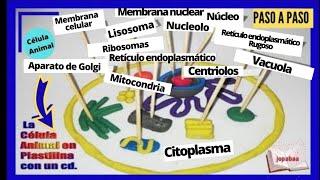 La Célula Animal con plastilina y en un Cd ( Maqueta)