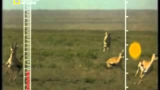 فلم وثائقي سرعة الفهد.mp4