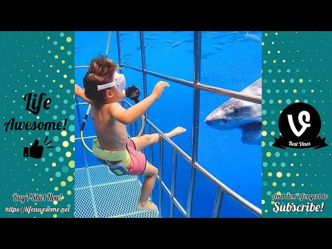 Funny Animals Reaction Try Not To Laugh Shark With Baby