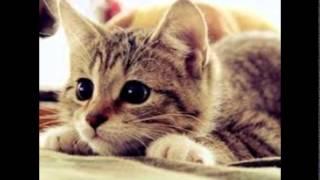 قطط كيوت